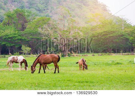 Hourses farm in the green garden mountain.