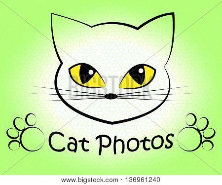 Cat Photos Shows Feline Photographer And Cameras