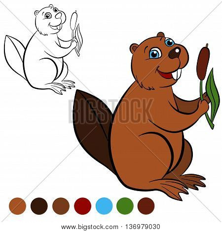 Coloring page. Color me: beaver. Little cute beaver holds a reed in the hands.