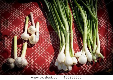 Home Grown Garlic And Onions On Material