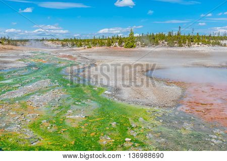 Hot springs, geysers, steam and bacteria in Norris Geyser Basin in Yellowstone National Park