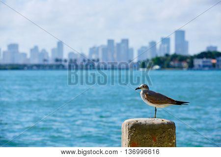 Miami downtown seagull mist foggy skyline from Miami Beach in Florida USA