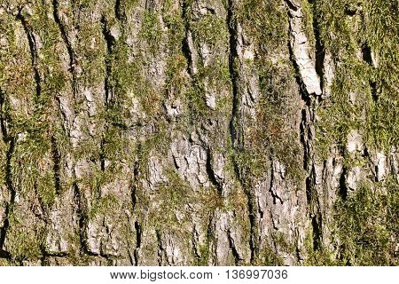 Close up view of brown tree bark with moss