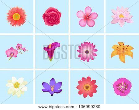 Flower color set design flat isolated. Flower floral, nature flower summer rose, spring flower, plant garden flower, petal flower, blossom flower, color flora, eco natural flower, bloom illustration
