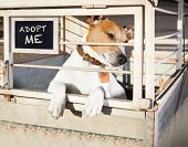 jack russell abandoned dog and left all alone in animal shelter or cage begging to be adopted and come home to owners poster