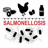 Salmonella typhimurium is a major cause of food poisoning in humans. Salmonellosis transmission of such food as meat fish eggs chicken milk poster