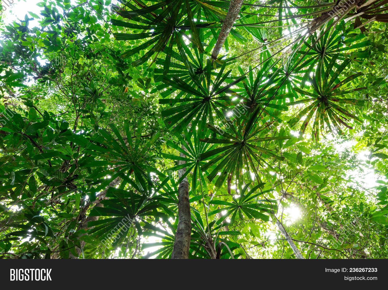 Lush Jungle Vegetation Image & Photo (Free Trial) | Bigstock