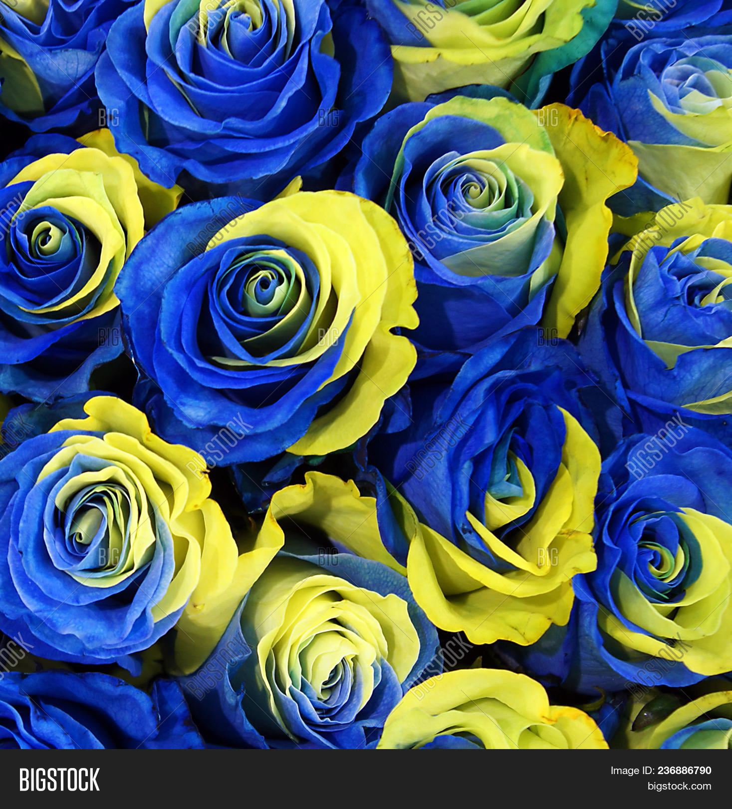 Blue Yellow Flowers Image Photo Free Trial Bigstock
