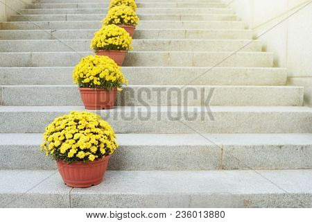 Yellow Flowers In Clay Pots Stand On A Stone Ladder. Decor Of Ladder Flight. Floristics. Landscaping