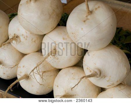 Japanese Turnip
