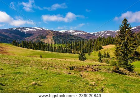 Forested Hills And Grassy Meadows In Springtime. Beautiful Landscape Of Borzhava Mountain Ridge With
