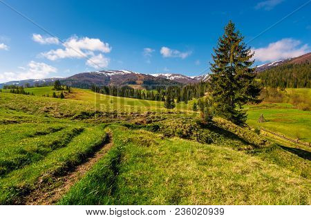 Rural Are In Carpathian Mountains In Springtime. Lovely Scenery With Rural Fields Between Forest And