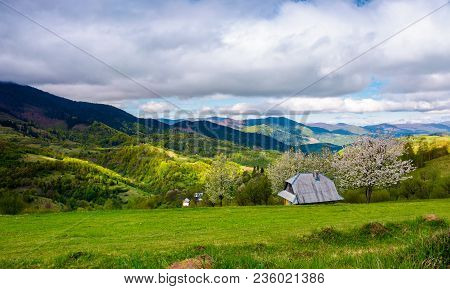 Blooming Orchard On The Hillside Near The Village. Beautiful Springtime Scenery In Mountains
