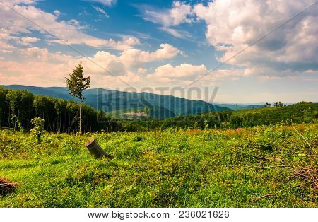 Forest Clearance On Hillside. Springtime Nature Scenery