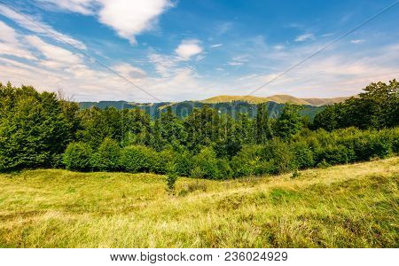 Forested Hill On The Meadow In Summer. Lovely Landscape With Svydovets Mountain Ridge In The Distanc