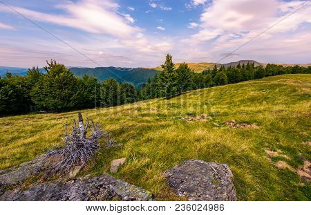Forest On The Hillside In Evening. Beautiful Landscape With Svydovets Mountain Ridge In The Distance
