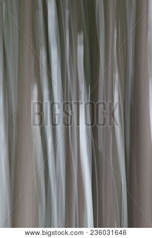 Vertical Image Of Gray Scale In Woodsy Scene Of Tree Trunks In Vertical Lines, Photograph Taken With