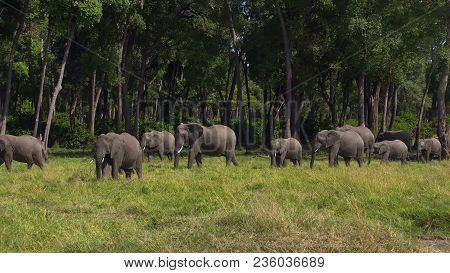 Elephant With Cattle Egrets In The Beautiful Landscape Of The Amboseli National Park In Kenya