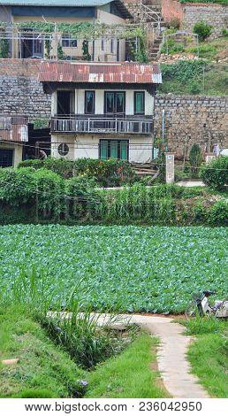 Rural Houses In Dalat, Vietnam
