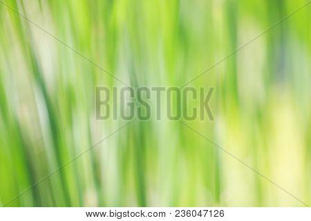 Natural Green Grass Leaves Defocused Natural Background