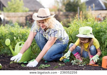Beautiful Woman And Her Chid Daughter Planting Seedlings In Bed In Domestic Garden At Summer Day. Ga