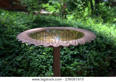 Bronze Bird Bath Filled With Water In A Backyard In Summer Surrounded By Green Vegetation