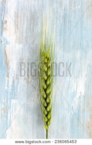 Green Wheat Ear From Above On Wooden Table.