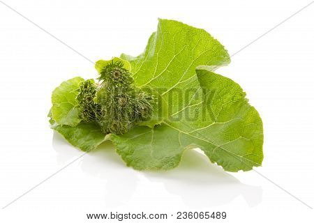 Healthy Medical Burdock Leaf With Blossom Isolated On White Background.