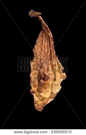 Dried Tobacco Leaf And Seeds Isolated On Black Background From Above.