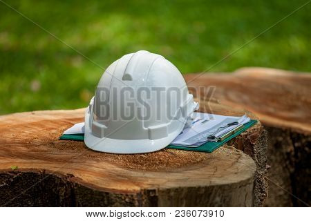 Safety Helmet And With Plan Documents Report On Big Stump Wood In Green Park Or Forest