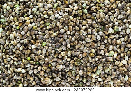 Very Sharp And Clear Background Surface Of Cannabis, Hemp Seeds, Cannabis Sativa