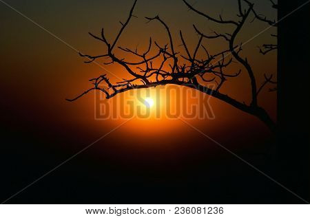 India, Mt. Abu, Sunset In Black Red Orange With Bush In Foreground Stark Image
