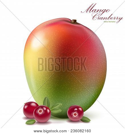 Fresh Mango And Cranberry Design Elements Isolated On White Background. Berries Set With Leaves. Man