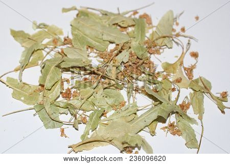 Linden Flowers. Herbal Medicine. Dry Linden Flowers On White Background. Basswood Tree.
