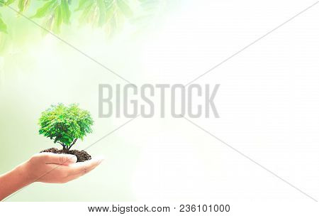 Earth Day Concept: Human Hands Holding Heart Shape Of Big Tree Over Green Forest Background