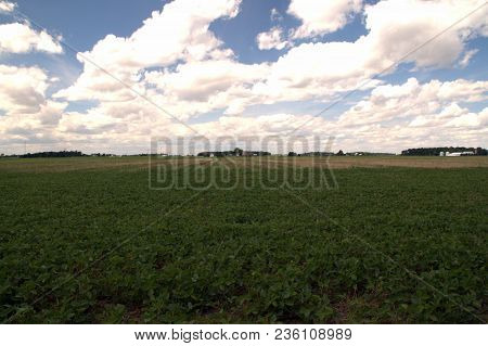 Vast Open Soybean Field With Cumulus Clouds And A Blue Sky Overhead In Summer