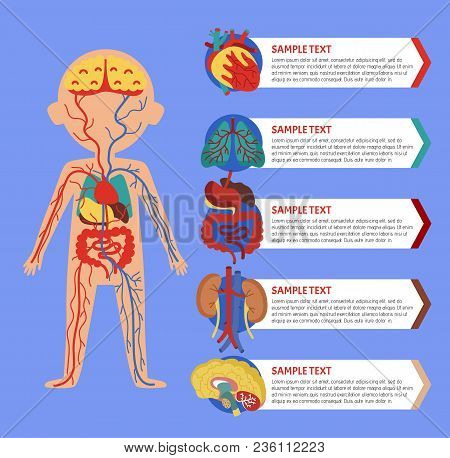 Health Medical Poster With Human Body Anatomy. Kidney, Lung, Liver, Heart, Stomach, Brain, Intestine