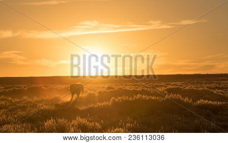 A Horse Walking Infront Of A Setting Sun
