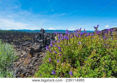 Wildflowers In Newberry National Volcanic Monument