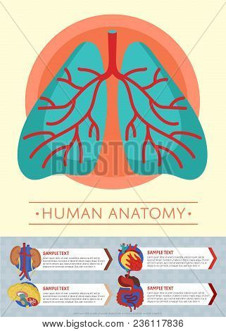 Human Anatomy Medical Poster With Internal Organs. Kidney, Lung, Liver, Heart, Stomach, Brain, Intes