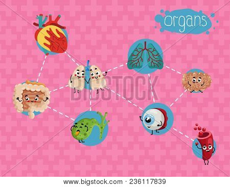 Healthcare Poster With Human Organs. Kidney, Lung, Eye, Heart, Stomach, Intestine Cartoon Characters