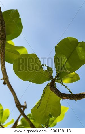Selective Focus Shot Of Green Leaves With Backlight On Blue Sky Background