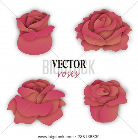 Set Of Four Paper Beige Pink Roses. 3 4 View On Flowers. Floral Elements For Design. Vector Illustra