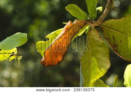 Green Leaves With Backlight On Blurred Background