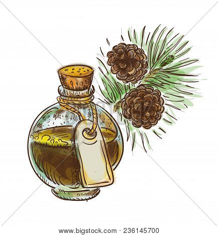 Pine Tar In A Bottle With Branch. Watercolor Imitation With Sketch. Vector Illustration.