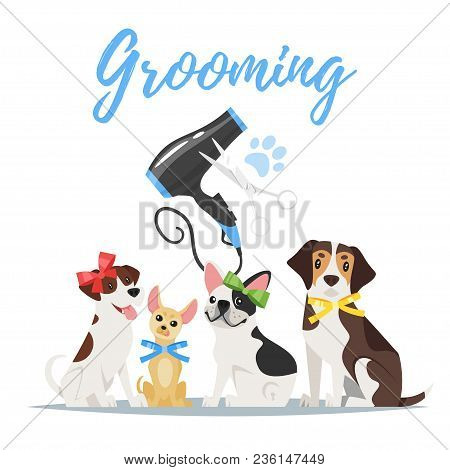 Vector Cartoon Style Illustration Of Dogs Of Different Breeds With Colorful Bows. Grooming Concept.