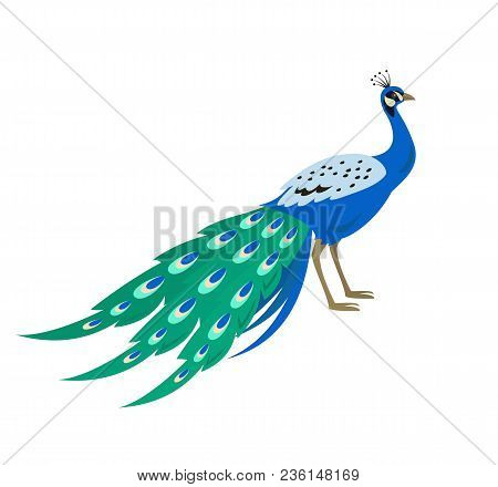 Cartoon Peacock Icon On White Background. Vector Illustration.