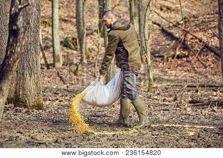 Forest Ranger At The Game Feeding Spot Spilling Maize On The Ground
