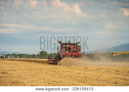 Harvester Machine To Harvest Wheat Field Working.