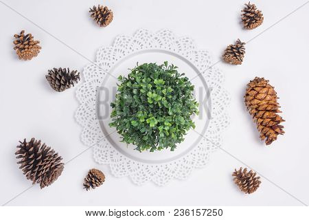 Tray With Pine Cones And Plant Flat Lay Top View